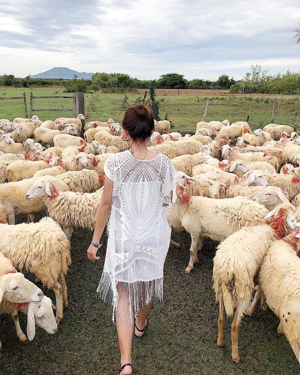 Đồng cừu như trời Tây thu nhỏ ở Khánh Hòa - Phụ Nữ Ngày Nay