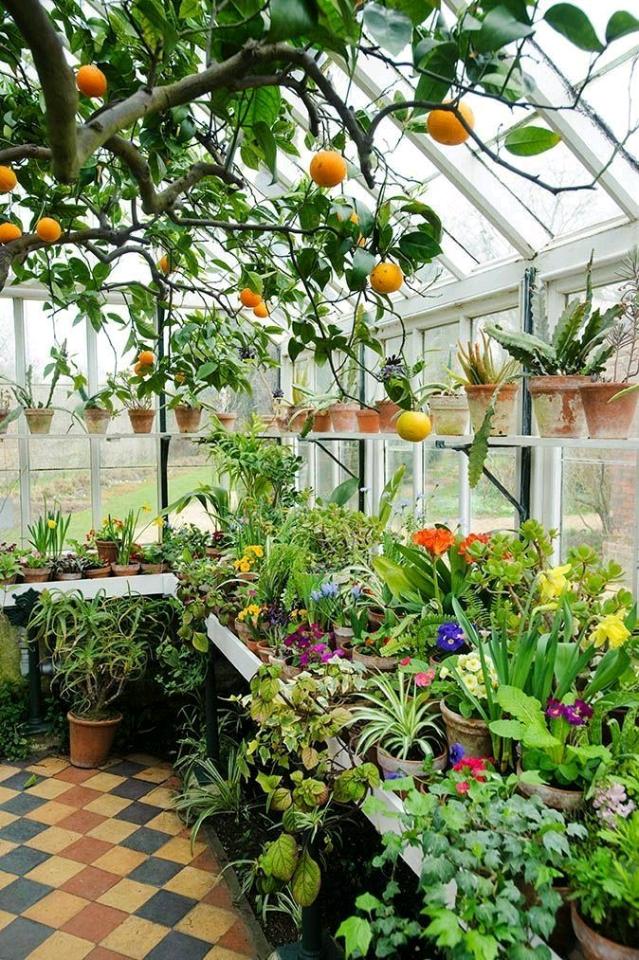 Nhà kính trồng rau bao phủ Đà Lạt gây hệ lụy khôn lường