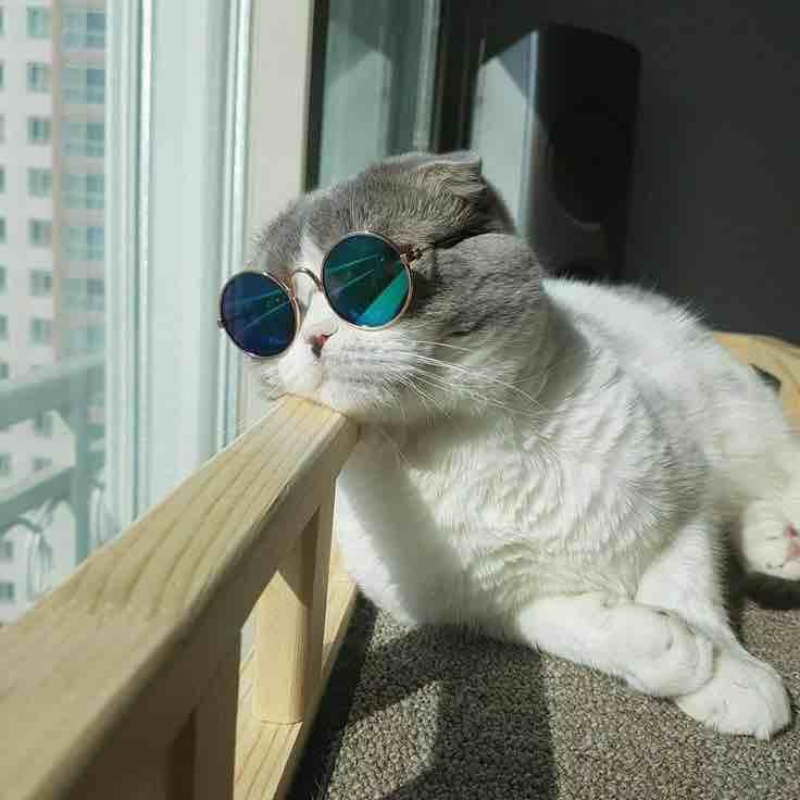 7 chú mèo được dân mạng bình chọn xinh đẹp nhất thế giới