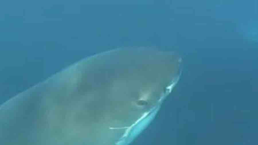 Khoảnh khắc cá mập trắng tấn công thợ lặn dưới biển