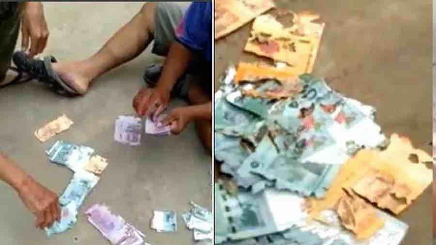 Khóc ròng vì bị mối gặm nát toàn bộ tiền cất trữ
