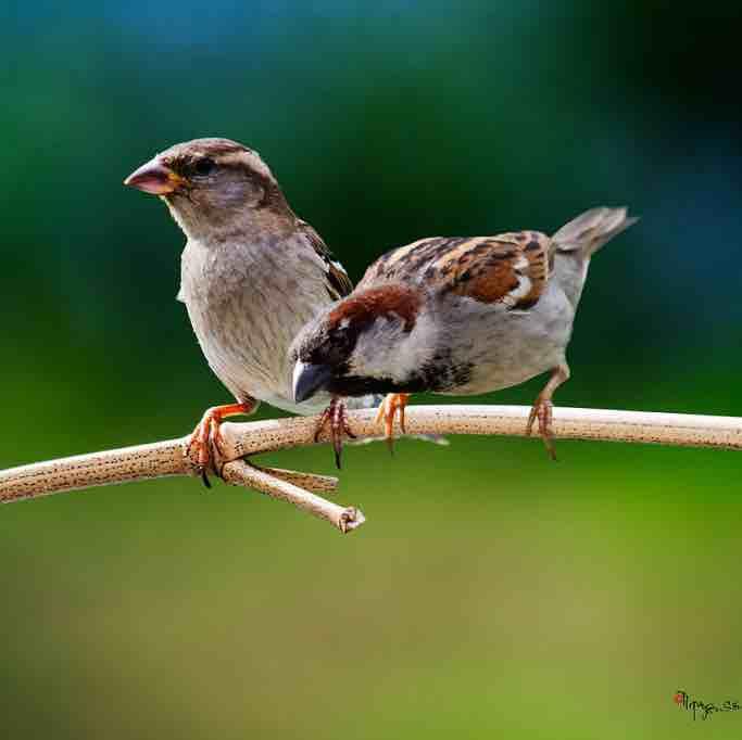Chim Sẻ Đi Nắng dùng K thần cẩu bay rừng nhà Shen Long