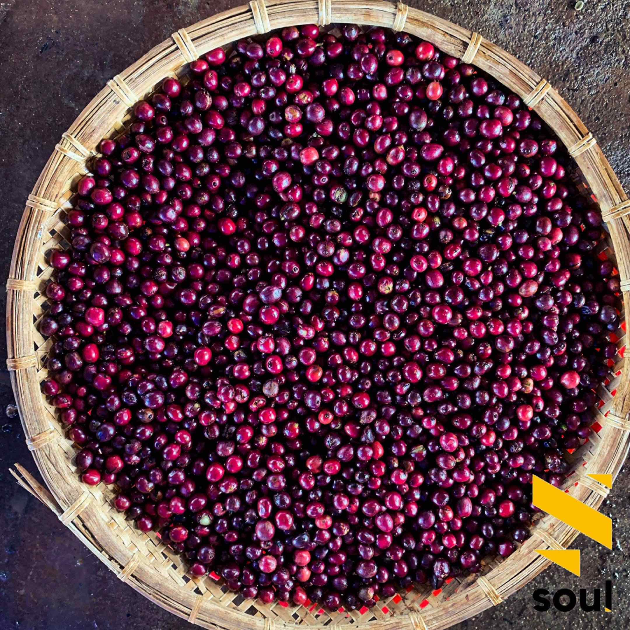 Soul of Vietnam coffee