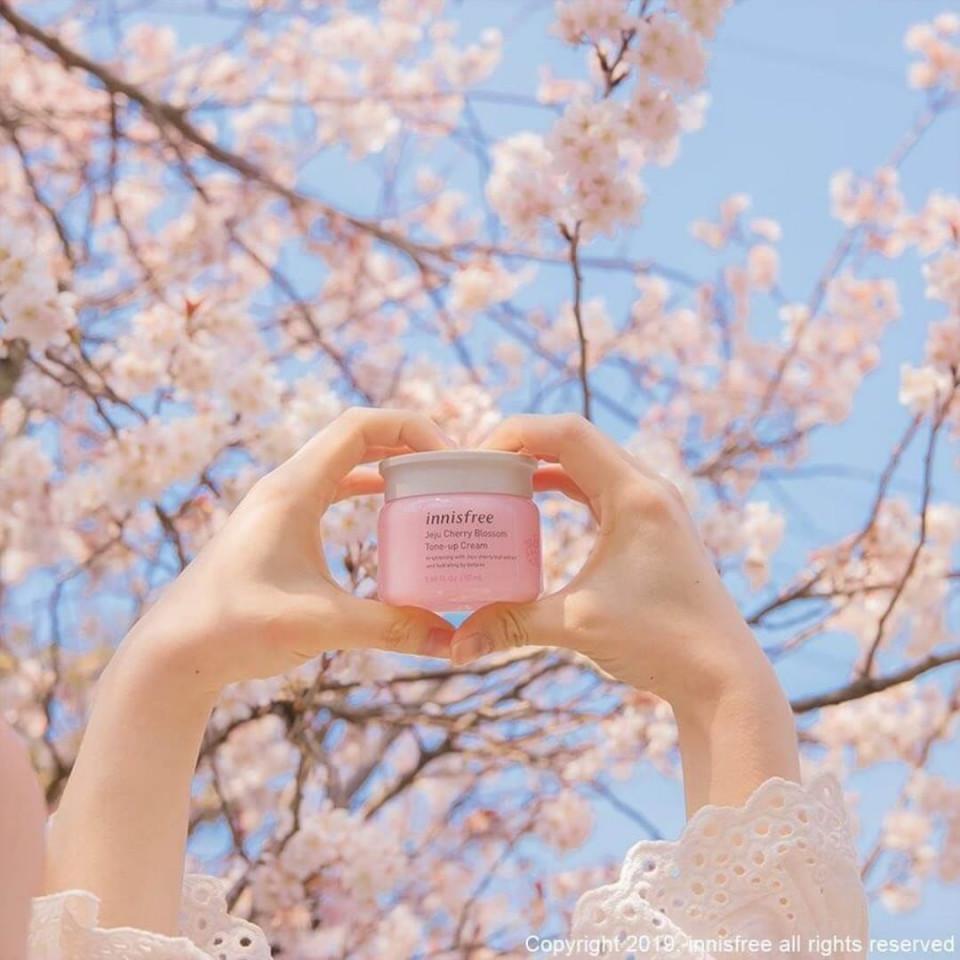 Hoa hồng đảo Jeju là biểu tượng mùa xuân của Hàn Quốc