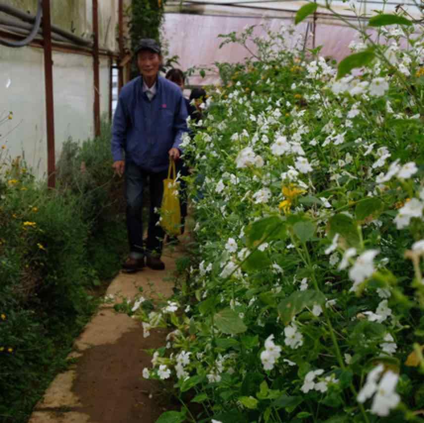 Người Đà Lạt dỡ nhà kính để trồng rau thuần tự nhiên