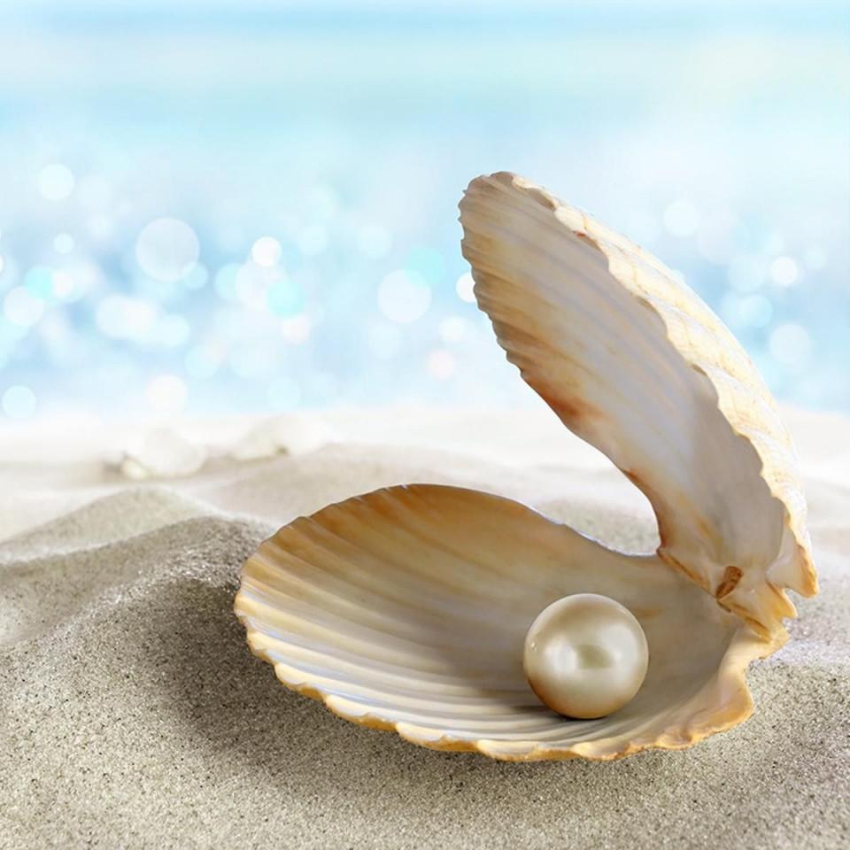 Vì sao ngọc trai biển có giá trị cao?