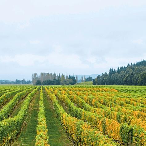 Babich - Rượu Vang New Zealand Từ Năm 1961