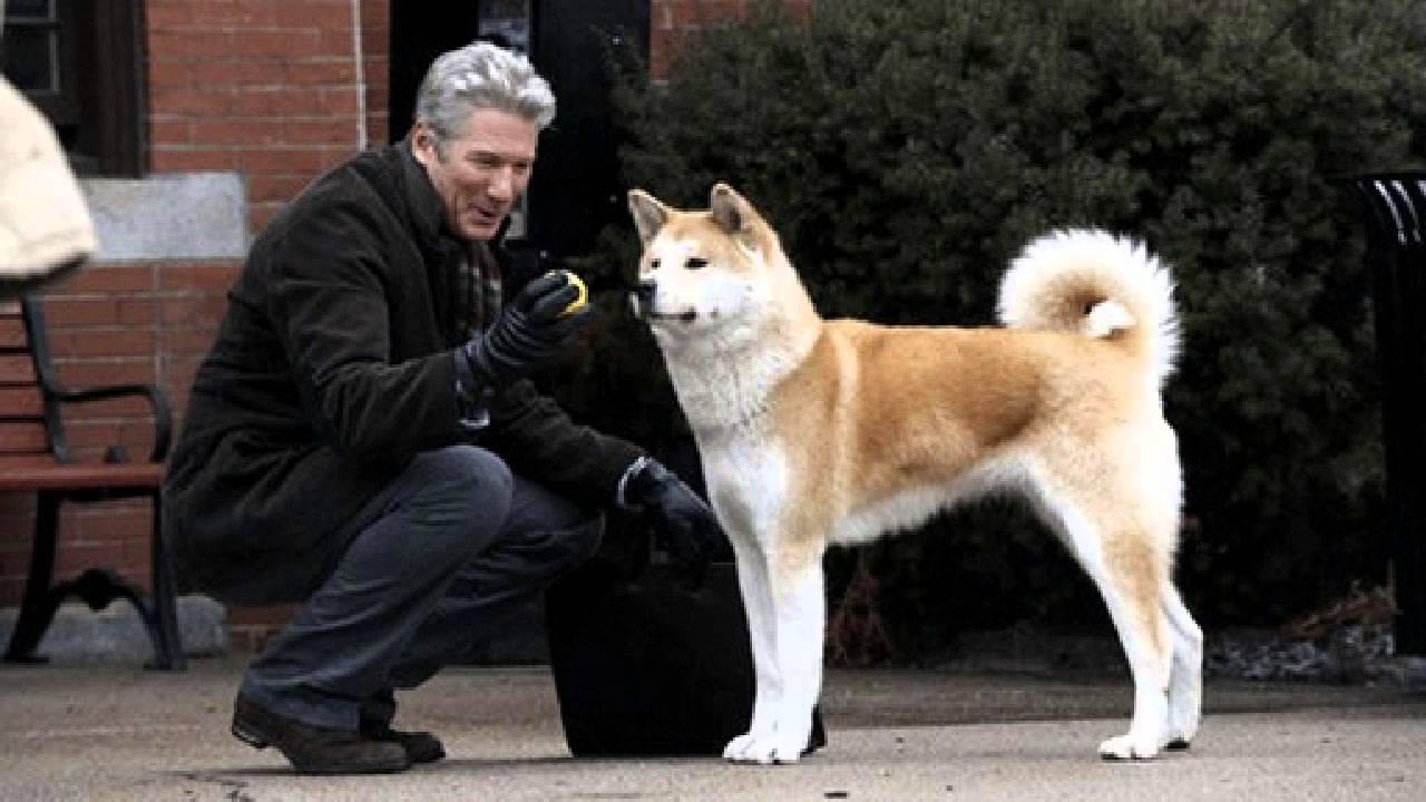 Hachiko - Chú chó trung thành tại Nhật bản