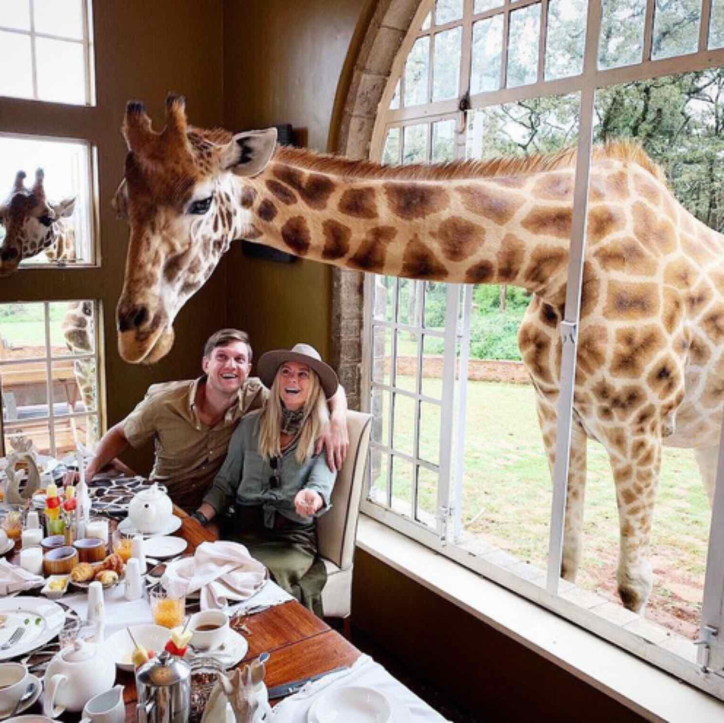 """Khách sạn nổi tiếng nhất châu Phi vì cho du khách ăn sáng cùng hươu cao cổ: Dễ thương thật, nhưng cái giá thì """"chát"""" quá!"""