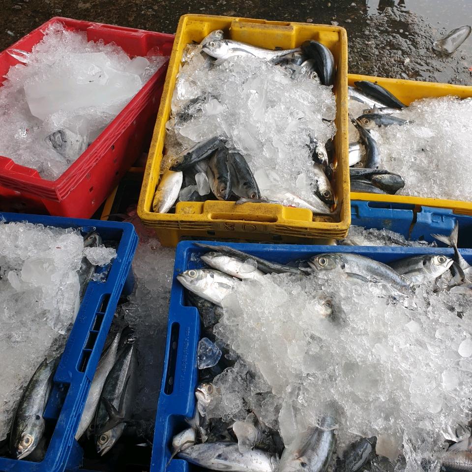 Lô hàng cá thu