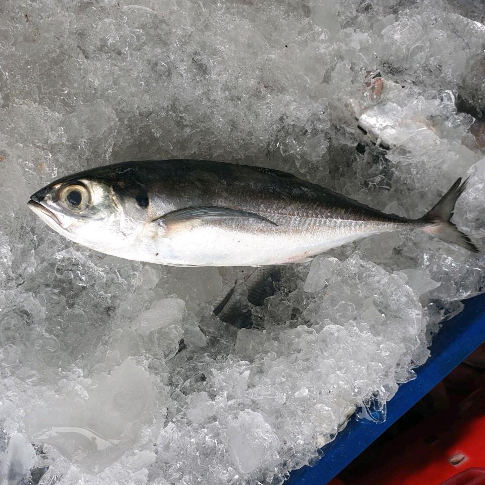 Thực phẩm Hải Sản Sông Đốc
