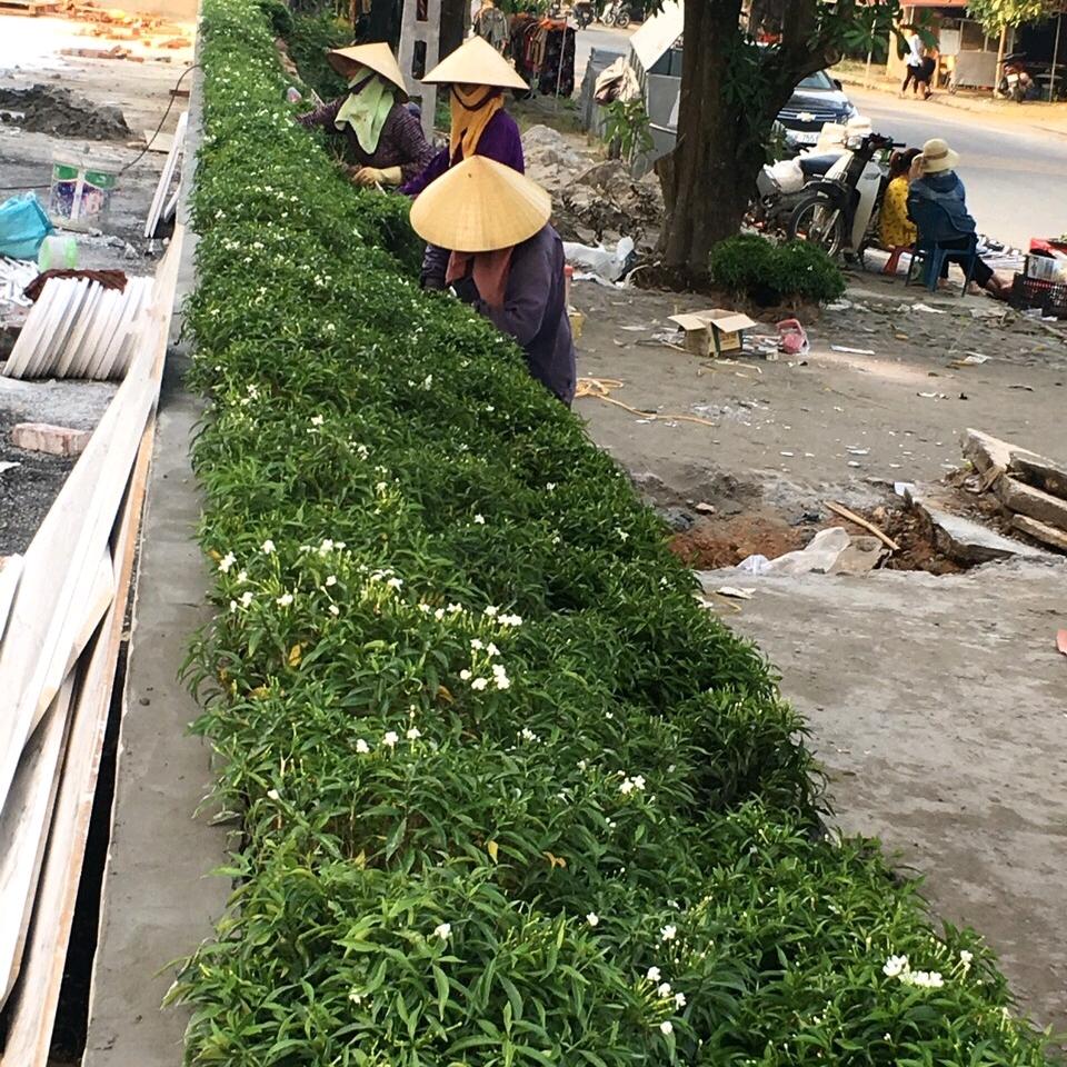 Công ty TNHH AN XANH đơn vị thi công chuyên nghiệp về dịch vụ sân vườn, tiểu cảnh, cây hoa, cây cảnh. Uy tín chất lượng