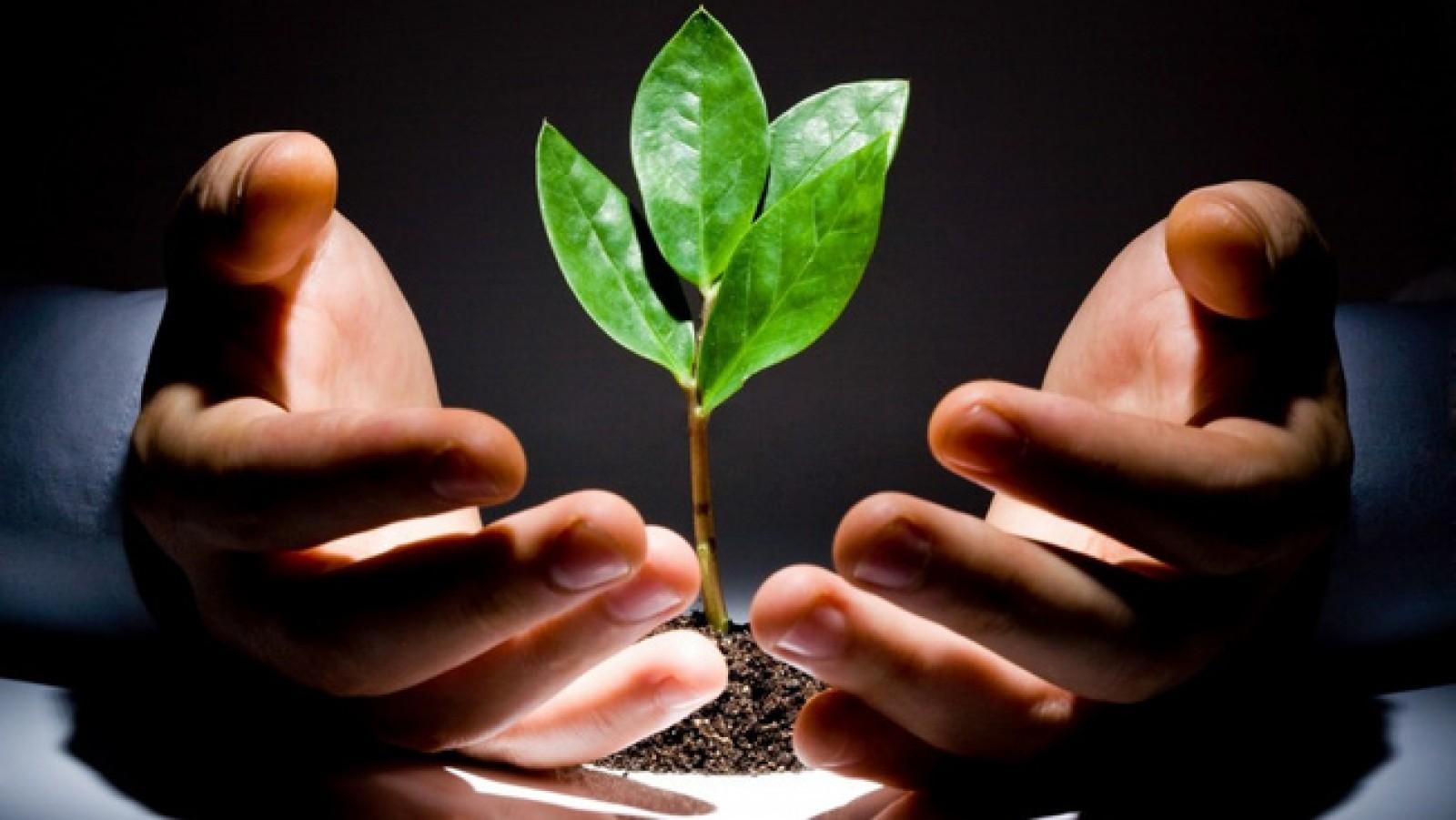 Hệ sinh thái khởi nghiệp số